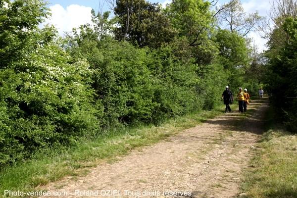 Gite avec sentier de randonnée en Vendée