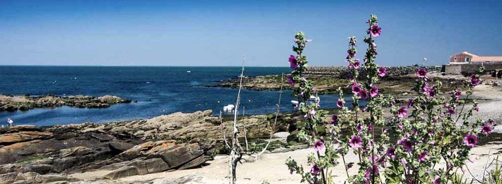 Gîtes pour visiter l ile dYeu