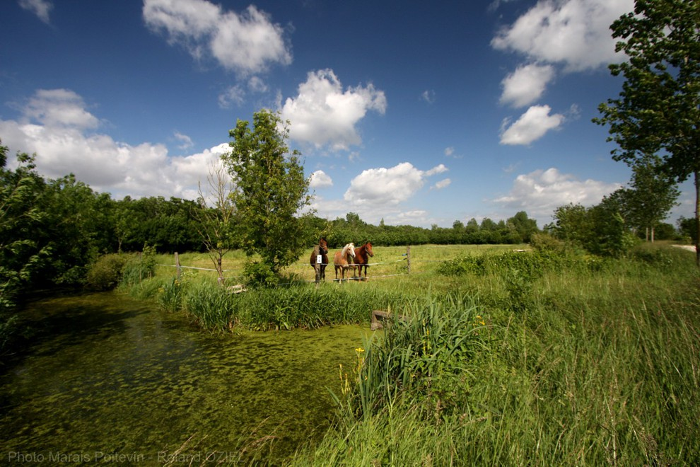 Marais mouillé dans le marais poitevin à proximité de nos gîtes